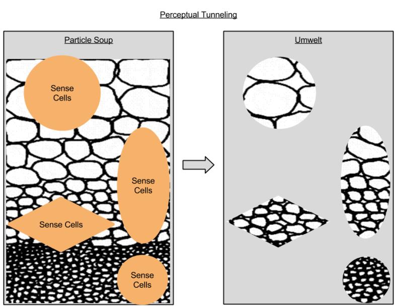 Perceptual Tunneling
