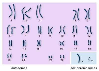 Natural Selection- Chromosomes