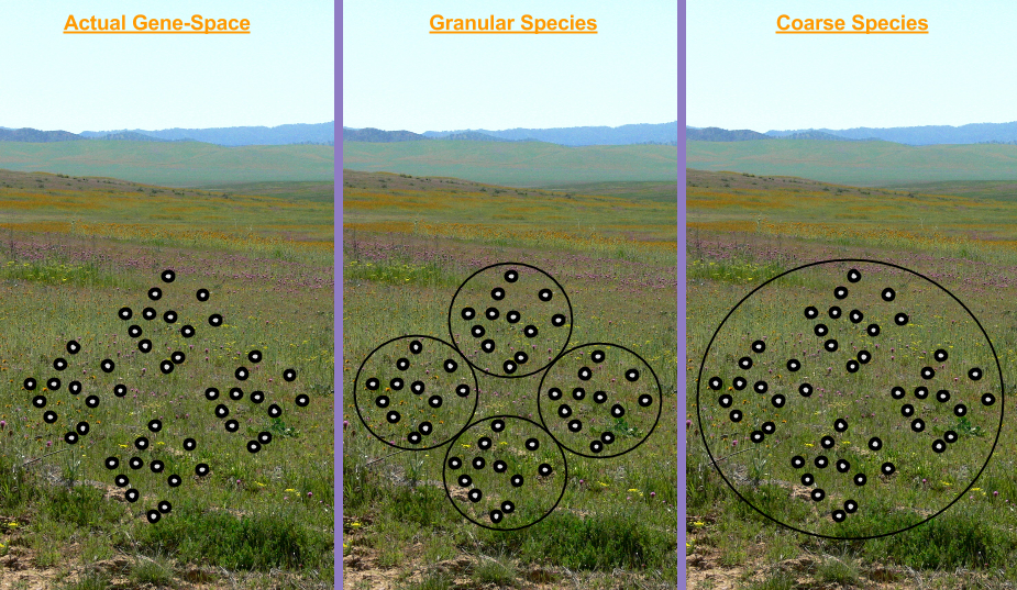 Population Genetics- Species Granularity (1)