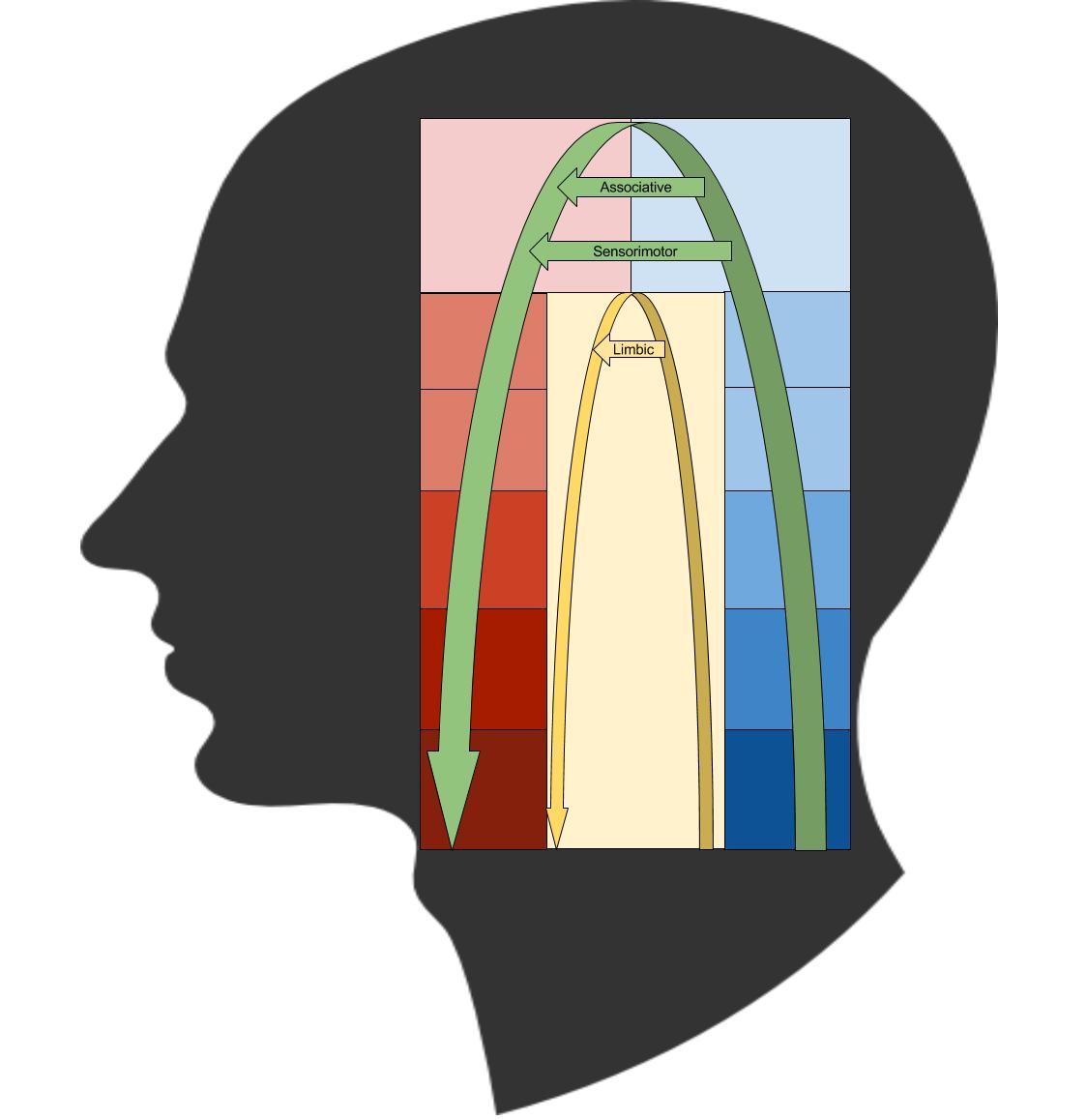 Basal Ganglia- Cybernetic Interpretation