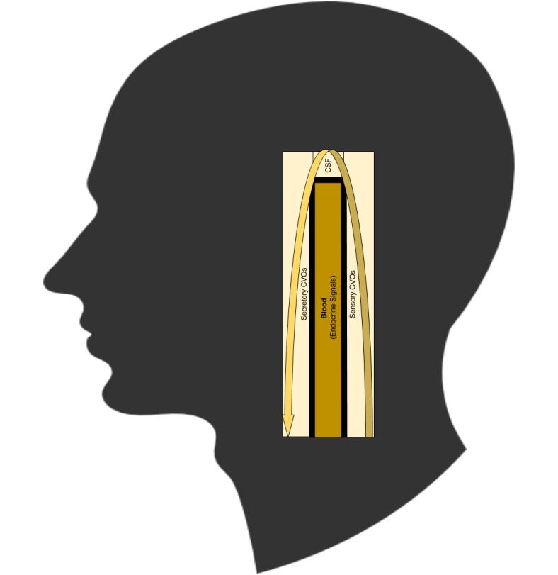 Neuroendocrine- Visceral Loop