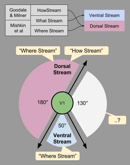 Three Streams- Dorsal Stream Tension (3)