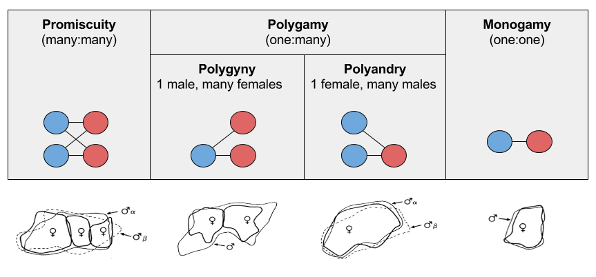 Primate Societies- Mating Systems and Territories