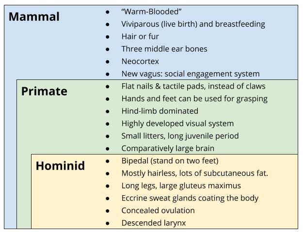 Primates_ Anatomical Cladistics.png