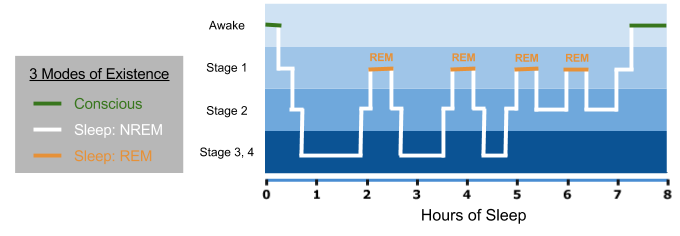 sleep-stages-across-night-3