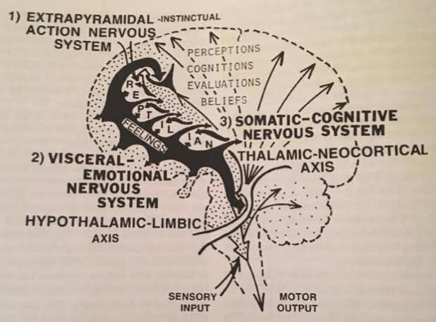 two-loops-intersection-at-basal-ganglia