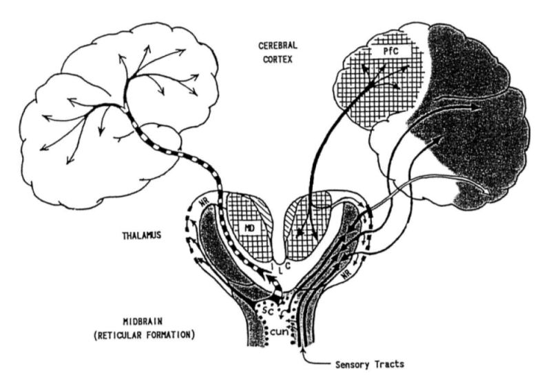 Consciousness Ignition- Thalamus ILC NR