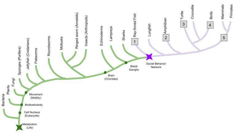 SBN- Phylogeny (1)