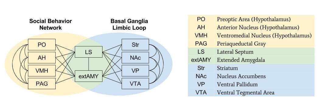 SBN- SBN vs Limbic Loop (2)