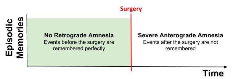 CLS- HM Amnesia Pattern v1 (1)