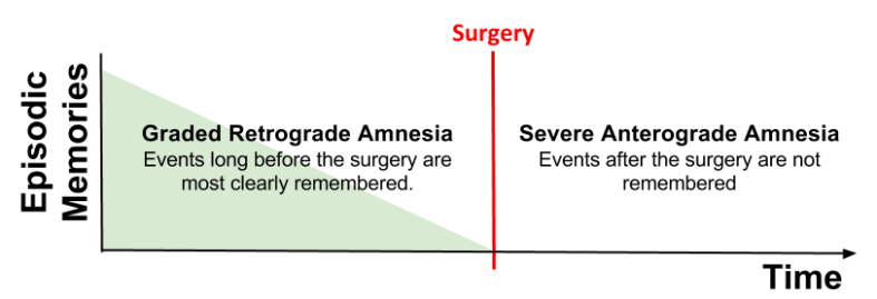 CLS- HM Amnesia Pattern v3 (2)