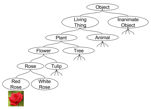 Naive Set Theory- Concept Hierarchy