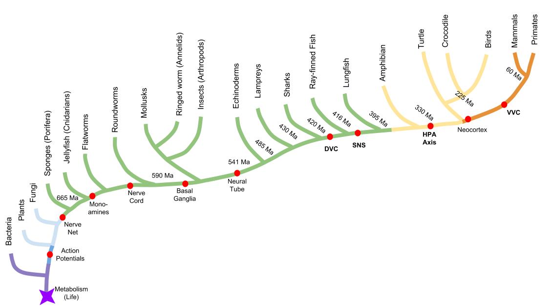 Polyvagal_ ANS Phylogeny