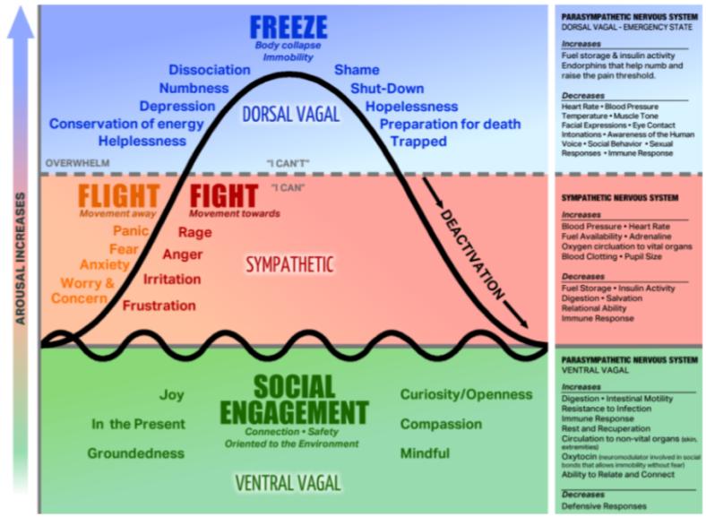 Polyvagal_ Response Hierarchy