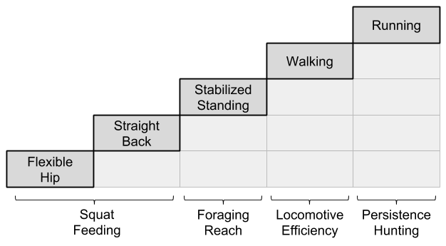 Bipedalism_ Ecological Pressures (2)