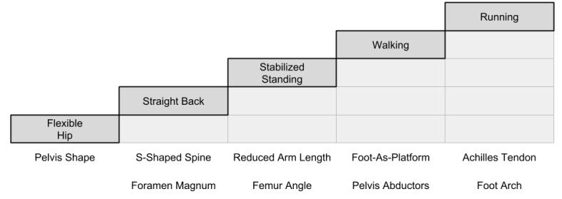Bipedalism_ Incremental Improvements (2)